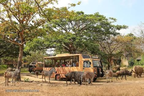 full day tour at bali zoo and bali safari and marine park