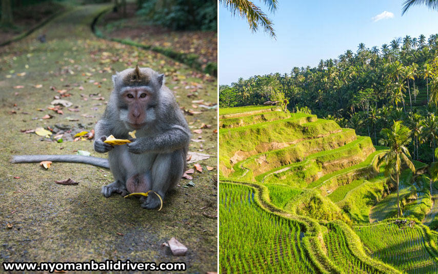 Bali Ubud Tour Packages